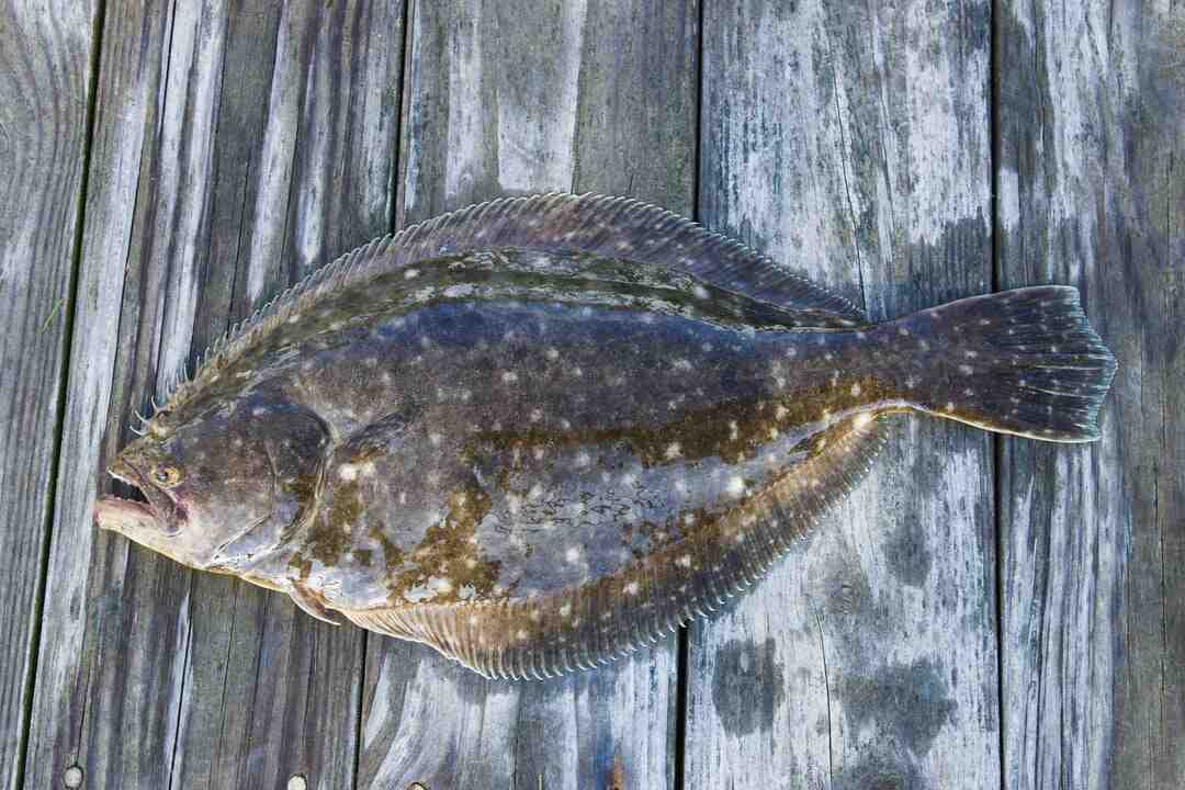 What is the healthiest fish to eat?